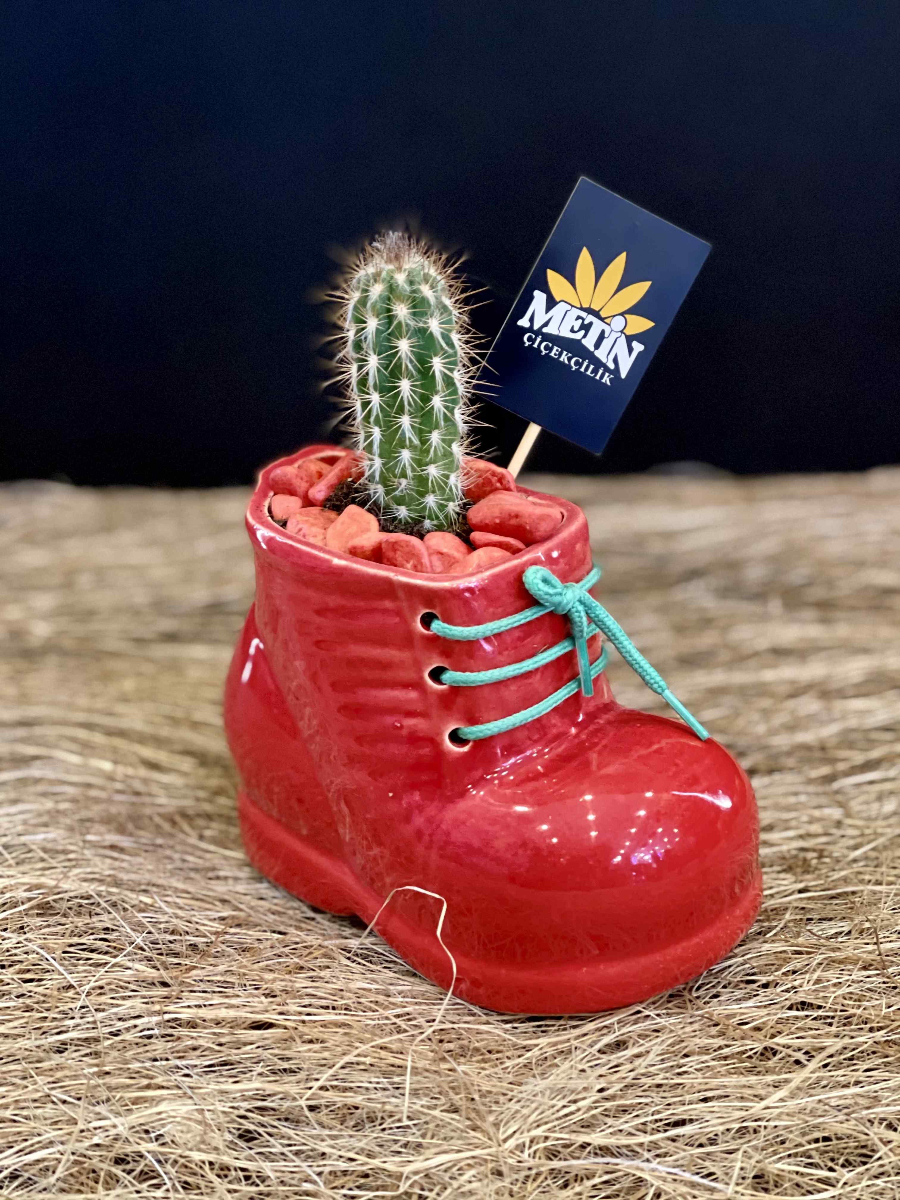 Dekoratif Seramik Ayakkabı Saksıda Kaktüs